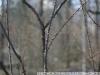 Пример фотографии на Pentax-M 50mm F1.4 SMC