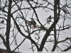 Примеры фотографий на Carl Zeiss Jena DDR Sonnar f3,5 135mm zebra