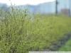 Фотография на Carl Zeiss Jena DDR Sonnar 2,8 180 zebra