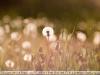 Photos at sonnar f2.8 180 carl zeiss