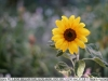 sony-sel50f18f-lens-50mm-f-1-8-image-10