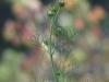 sony-sel50f18f-lens-50mm-f-1-8-image-11