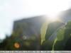 sony-sel50f18f-lens-50mm-f-1-8-image-12