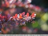 sony-sel50f18f-lens-50mm-f-1-8-image-3
