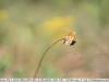 sony-sel50f18f-lens-50mm-f-1-8-image-31