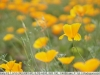sony-sel50f18f-lens-50mm-f-1-8-image-36