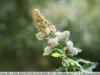 sony-sel50f18f-lens-50mm-f-1-8-image-37