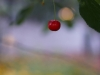 sony-sel50f18f-lens-50mm-f-1-8-image-39