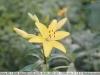 sony-sel50f18f-lens-50mm-f-1-8-image-4