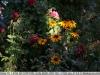 sony-sel50f18f-lens-50mm-f-1-8-image-40