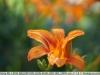 sony-sel50f18f-lens-50mm-f-1-8-image-41