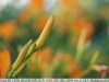 sony-sel50f18f-lens-50mm-f-1-8-image-42