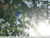 sony-sel50f18f-lens-50mm-f-1-8-image-44