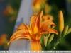 sony-sel50f18f-lens-50mm-f-1-8-image-48