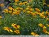 sony-sel50f18f-lens-50mm-f-1-8-image-49