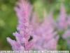 sony-sel50f18f-lens-50mm-f-1-8-image-6