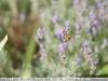 sony-sel50f18f-lens-50mm-f-1-8-image-7