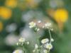 sony-sel50f18f-lens-50mm-f-1-8-image-9