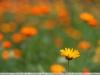 super-takumar-50-1-4-lens-image-14