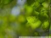 Super-Takumar 85 1.9 фото на кроп