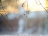 jupiter-21t-200-mm-f4-lens-review-5