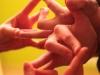 Пример фотографии на Super-Takumar 1.4 50, пальчики и мудры