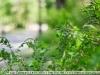Фото на Такумар 55мм