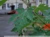 Пример Фото на Tamron AF 17-50 mm f 2.8 VC