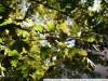 Фото на Tamron AF 18-200 mm f 3.5-6.3