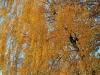 tamron-28-300-pzd-vc-di-a010n-image-15