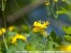 Фото на Tamron AF 28-75mm f/2.8 SP XR Di LD Aspherical (IF)