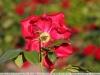 tamron-b008-18-270-pzd-image-18