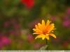 tamron-b008-18-270-pzd-image-34
