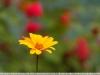 tamron-b008-18-270-pzd-image-37