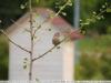 tamron-b008-18-270-pzd-image-6