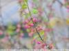 tokina-at-x-242-lens-24-200-sample-20