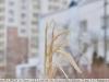 Пример фотографии на Tokina AT-X 270 AF PRO боке обьектива