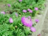 Фото на Tokina AF 28-70 mm 2.8-4.5 Macro