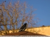 пример фотографии на Tokina 24-70 mm AT-X PRO FX SD