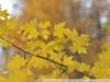 Фото на МС Волна-3 2.8 80