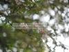 Пример фото на объектив Волна-4