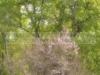 dsc_5435-volna-8n-52mm-f-1-2
