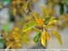 yongnuo-35mm-f2n-lens-review-nikon-d700-22