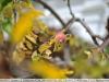 yongnuo-35mm-f2n-lens-review-nikon-d700-24