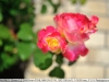 yongnuo-35mm-f2n-lens-review-nikon-d700-25