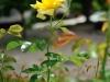 yongnuo-35mm-f2n-lens-review-nikon-d700-26