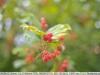 yongnuo-35mm-f2n-lens-review-nikon-d700-8