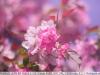 yongnuo 50mm 1.8 примеры фото