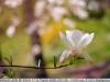 yongnuo 50mm 1.8 примеры фотографий