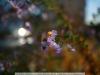 b-yn-35mm-f-1-4-yongnuo-lens-sample-34